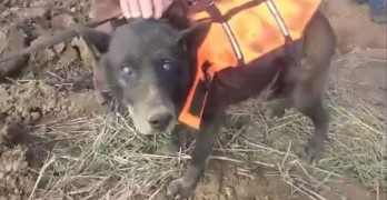 Blind Senior Dog Called Christmas Rescued After Spending Month in Well