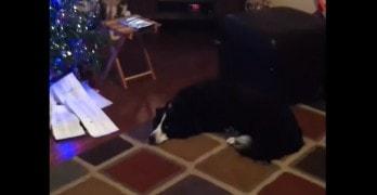 Dog Gets Excited for Santa's Arrival