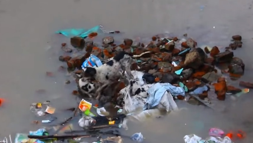 Mother Dog Braves Flooding in India to Save her Pups