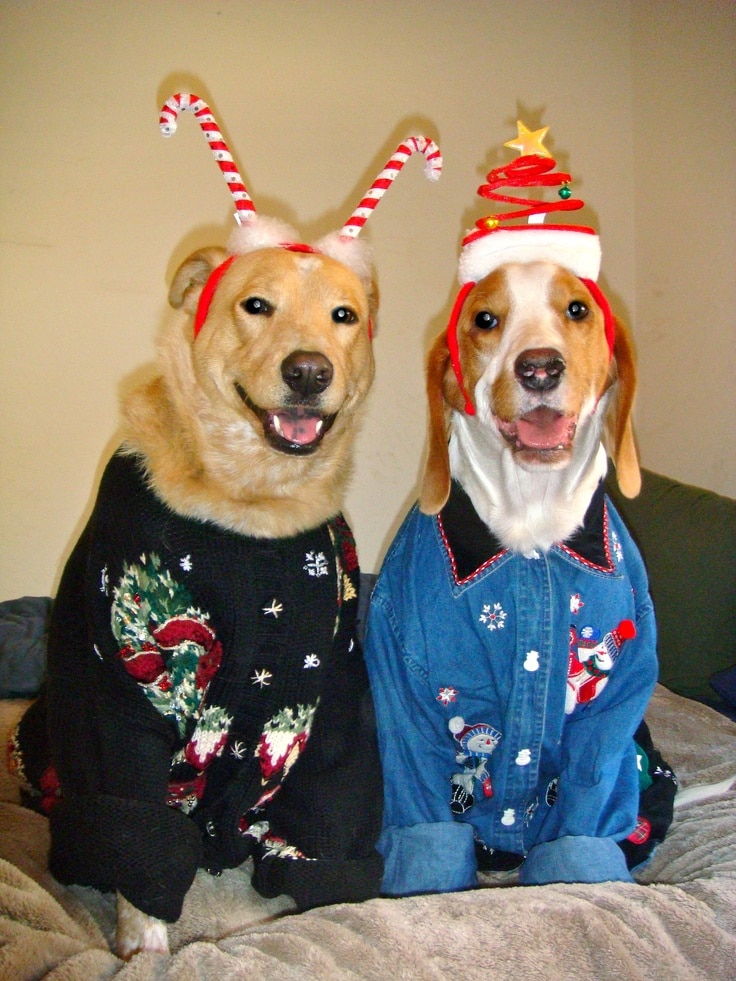 Ugly Dog Sweaters