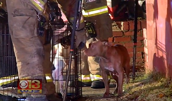 12.3.15 - Dog Who Guarded Owner After Fire Gets a New Home3