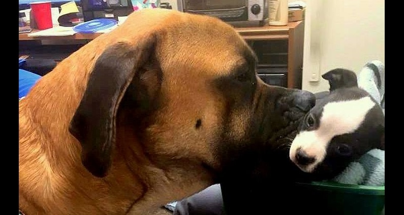 Two Dogs Meet at a Hospital and Become Best Friends