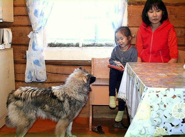 12.31.15 - Dog & Girl Who Survived Siberian Wilderness Honored with Statue6