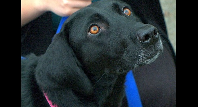 Dog Insistent on a Walk Leads Owner to Missing Elderly Woman
