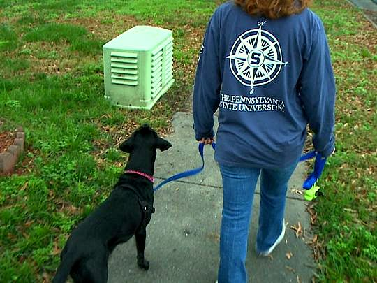 12.31.15 - Dog Out on a Walk Leads Owner to Missing Elderly Woman1