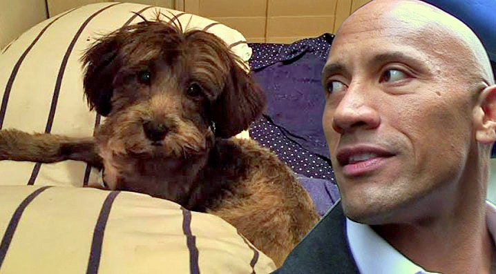 Dwayne Johnson Is Helping to Save the Life of a Stranger's Puppy