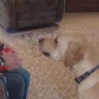 Clever Dog Knows the Ingredients for His Favorite Treat