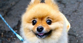 New Drug Adds Five Years to Your Dog's Life
