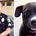 12.9.15 - Police Chief Resigns After Shooting Dog6