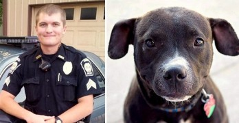 Police Chief Resigns After Shooting Caged Dog