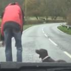 "Dash Cam Captures ""Dramatic"" Dog Rescue"