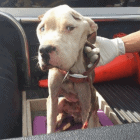 Neighbors Alert Police and Save Emaciated, Tethered Dog