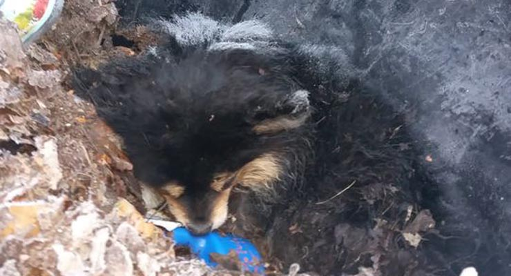 Small Dog Found Freezing to Death in Garbage Can