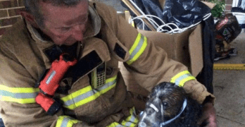 Australian Firefighters Save Puppy Trapped in House Fire