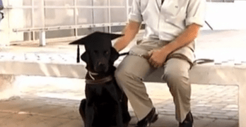 Service Dog Earns College Degree