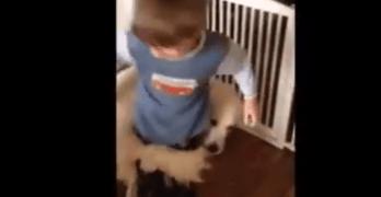 Dog Finds New Way to Hug