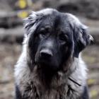 Amazingly Beautiful Dirty Dog