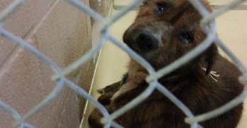 Saving Rudy, the Death Row Dog