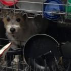 Dog Goes Missing Inside Pet Owner's Home