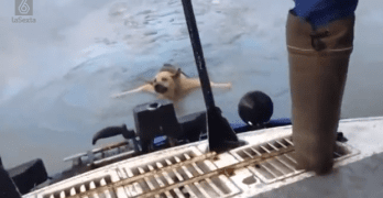 Dog Almost Freezes to Death in Russian Icy River