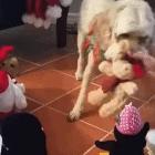 Dogs Love Christmas Too