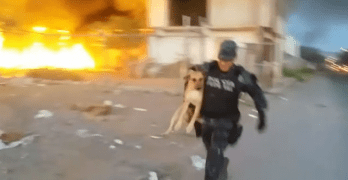 Policeman Saves Dog About to Die in Uncontrollable Fire