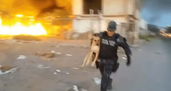 Police men running to safety with Lulu. Photo credit: Policía Federal de México/YouTube