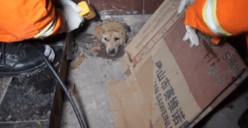 Dog Pushes Through Drain Pipe and Gets Stuck