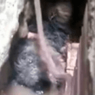 Dog Spends 36 Hours Trapped in Small Cavity and Survives