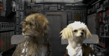 Dogs Do Star Wars