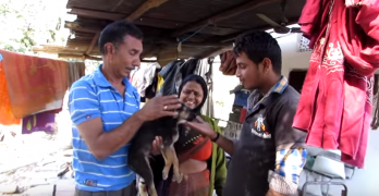Pet Owner Fearing for Dog's Life Gets Wonderful News