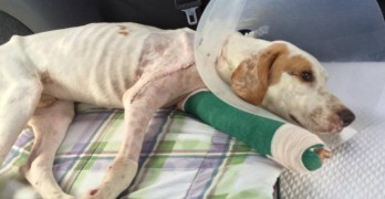 Broken Dog Heals and Hopes to Find Forever Home
