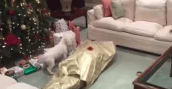 The Best Gift for a Dog