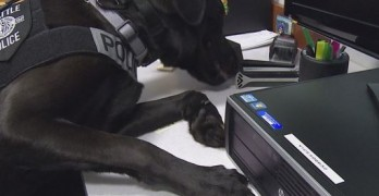 Police Dog Sniff Out Child Predators