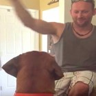 Man Messing With Dog Gets His Comeuppance!