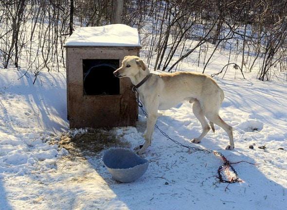 1.1.16 - FBI's New Animal Cruelty Classification Program Begins Today2