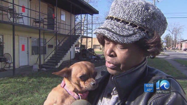 Woman's Dog Found Alive After House Fire Takes Everything Else