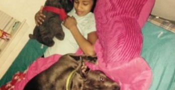 Judge Delays Decision in Ruling on Little Girl's Service Dog