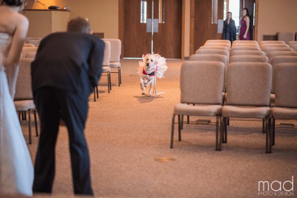 1.18.16 - bride dog 3