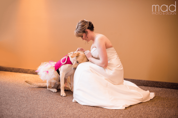 1.18.16 - bride dogFEAT