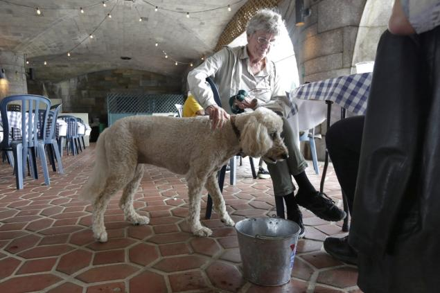 NYC Health Officials Fighting Back on Dining With Dogs Laws