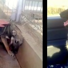See the Heartbreaking Moment an Abused Dog Is Pet for the First Time