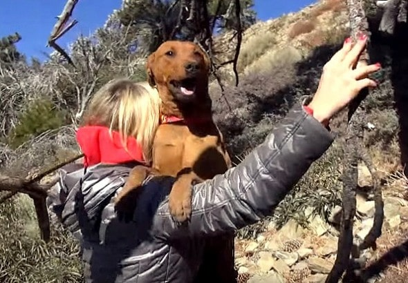1.2.16 - Three Dog Sisters Living on Freezing Mountain Rescued5