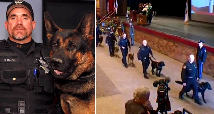 Over 100 K-9s Walk in Funeral Procession for Slain Police Dog, Jethro