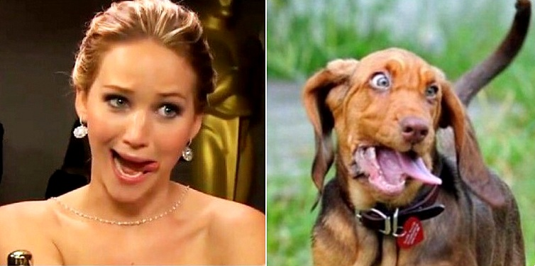 Twitter Account Shows Followers Who Their Dog Twin Is
