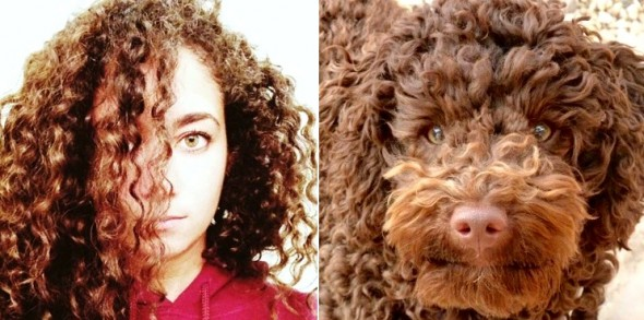 1.21.16 - Twitter Account Shows Users Who Their Dog Twin Is5
