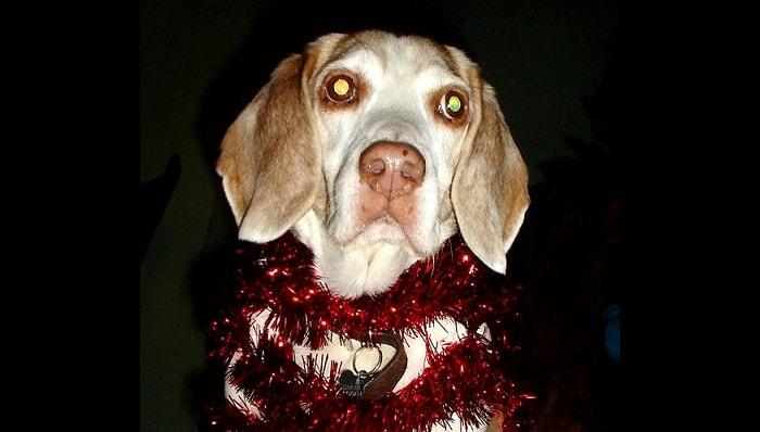 "Beloved Max, the ""Terminally Stupid"" Dog"