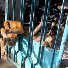 Street Dog Trapped in a Gate Has the Sweetest Reaction to Being Freed