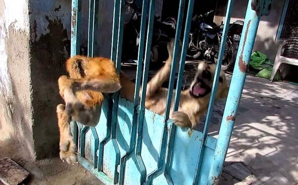 1.23.16 - Trapped Dog's Reaction to Being Freed1