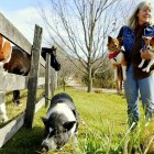 Two Dogs and a Pot-Bellied Pig Find Love – and a Home – Together